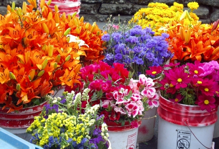 Buckets of beautiful flowers awaiting arrangement at Ia's Garden. Photo copyright 2009 by Zachary D. Lyons.