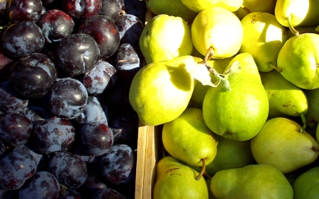ACMA plums and pears. Photo copyright 2009 by Zachary D. Lyons.