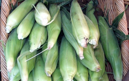 Sweet corn from Full Circle Farm. Photo copyright 2009 by Zachary D. Lyons.