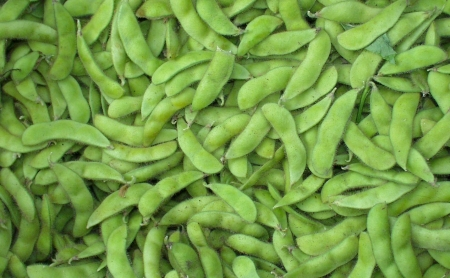 Fresh edamame from Stoney Plains Farm. Photo copyright 2009 by Zachary D. Lyons.