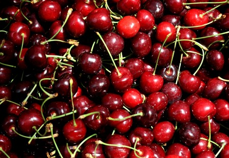 Early bing cherries from Martin Family Orchards. Photo copyright 2012 by Zachary D. Lyons.