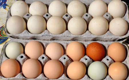Farm-fresh chicken & duck eggs from Sky Valley Family Farm at Wallingford Farmers Market. Copyright Zachary D. Lyons.