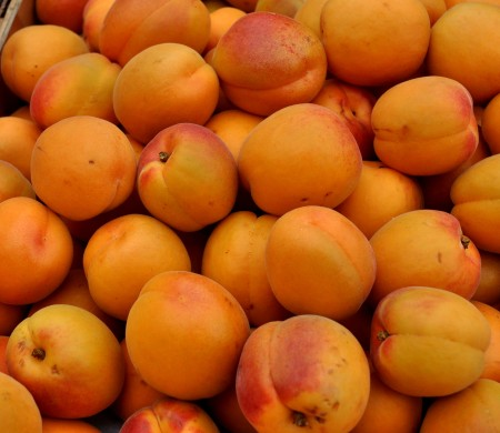 Tomcot apricots from Collins Family Orchards. Photo copyright 2013 by Zachary D. Lyons.