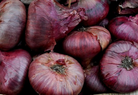 Red cippolini onions from Kirsop Farm. Photo copyright 2013 by Zachary D. Lyons.