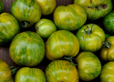 Green Zebra tomatoes from Seattle Youth Garden Works. Photo copyright 2013 by Zachary D. Lyons.