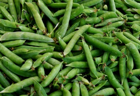 English shelling peas from Alvarez Organic Farms. Photo copyright 2014 by Zachary D. Lyons.