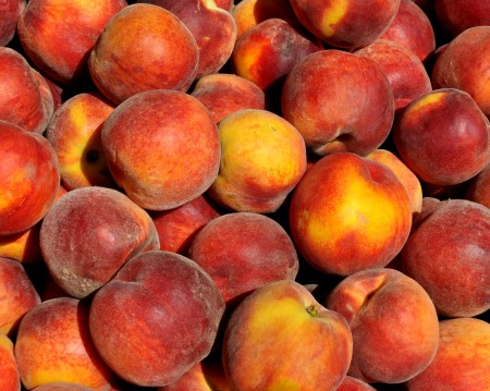 Sugar Time peaches from Collins Family Orchards.. Photo copyright 2014 by Zachary D. Lyons.