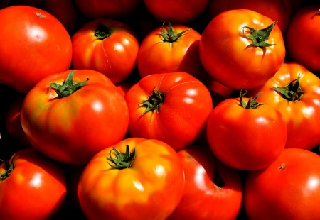 Beefsteak tomatoes from Alm Hill Gardens. Photo copyright 2014 by Zachary D. Lyons.