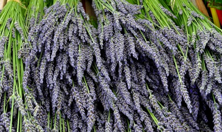 Fresh cut lavender from Around The Table Farm. Photo copyright 2014 by Zachary D. Lyons.