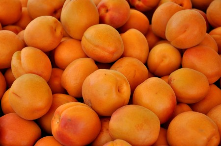 River apricots from Collins Family Orchards. Photo copyright 2014 by Zachary D. Lyons.