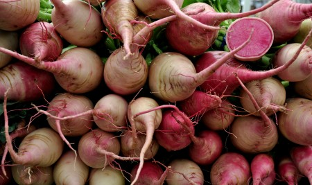 Red Meat radishes from Kirsop Farm. Photo copyright 2014 by Zachary D. Lyons.