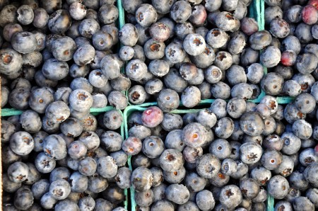 Organic Spartans Blueberries Whitehorse Meadows. Photo copyright 2014 by Zachary D. Lyons.