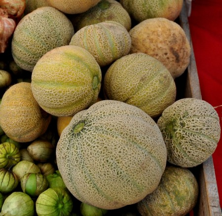 Icebox cantaloupe melons from Around The Table Farm at Wallingford Farmers Market. Copyright Zachary D. Lyons.