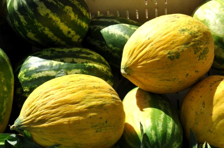 Ginormous melons from Lyall Farms at Wallingford Farmers Market. Copyright Zachary D. Lyons.