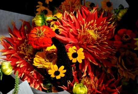 Late summer flower bouquet from Pa Garden at Wallingford Farmers Market. Copyright Zachary D. Lyons.