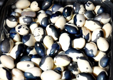 Fresh Orca beans from Alm Hill Gardens at Wallingford Farmers Market. Copyright Zachary D. Lyons.