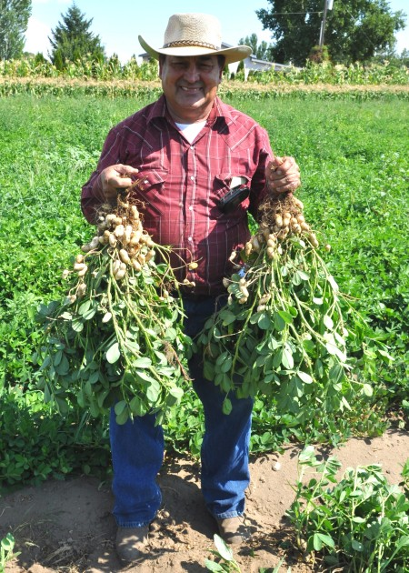 Don Hilario Alvarez Organic Farms holding freshly dug peanuts on the farm. Copyright Zachary D. Lyons.
