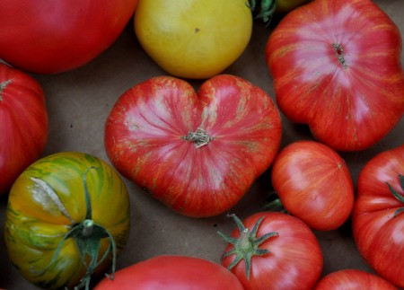 A heart-shaped tomato from Around The Table Farm at Wallingford Farmers Market. Copyright Zachary D. Lyons.