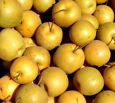 Asian pears from Tinys Organic at Wallingford Farmers Market. Copyright Zachary D. Lyons.
