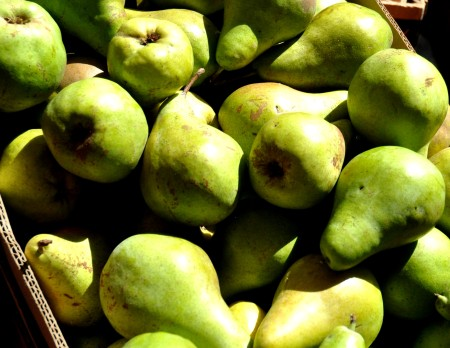 Concorde pears from Tiny's Organicat Wallingford Farmers Market. Copyright Zachary D. Lyons.